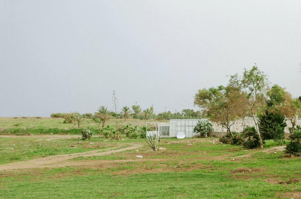 manifesto del futurismo rurale web